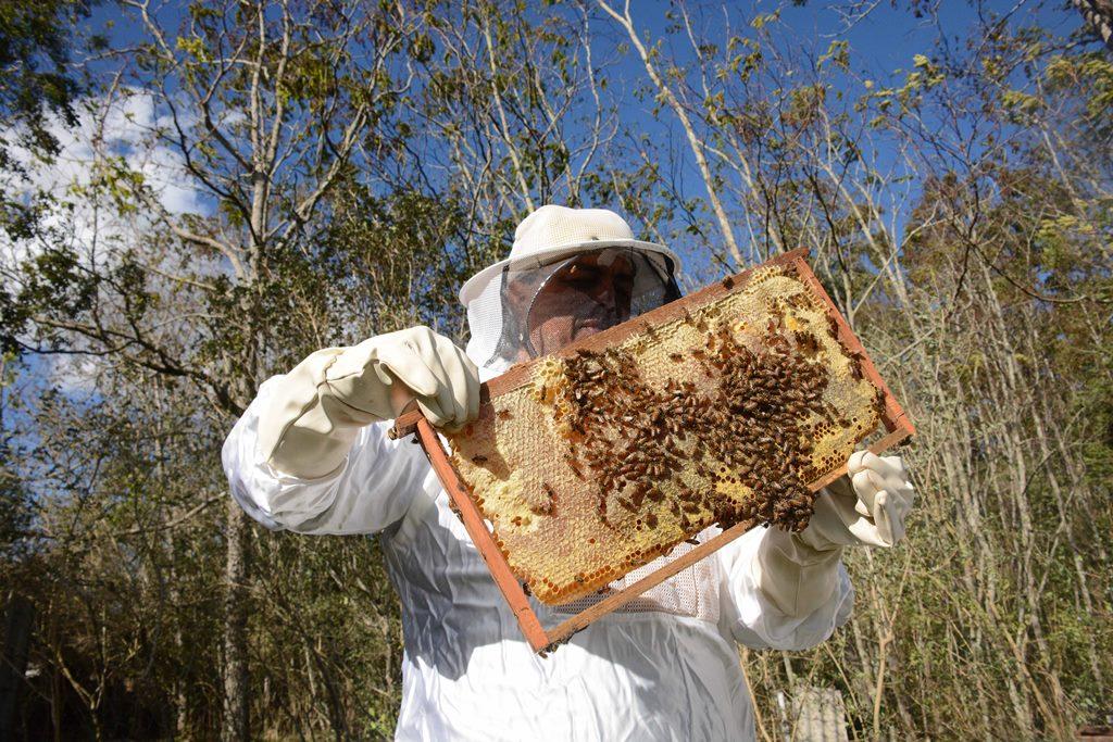 Safra de mel fica  aquém do esperado
