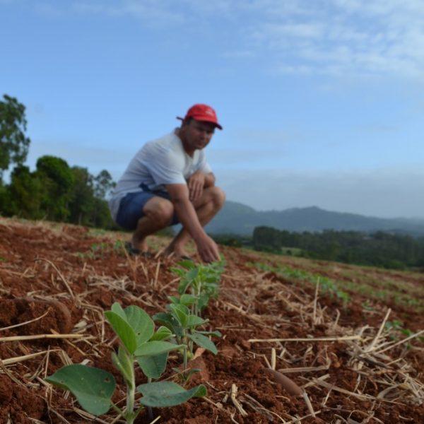 Mecanizada, lavoura de soja cresce