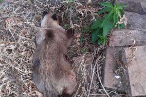Animal desapareceu no dia 25 e foi encontrado morto dois dias depois