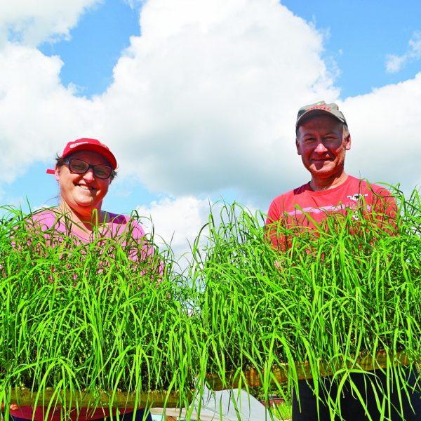 Cultivo de grama vira opção de renda
