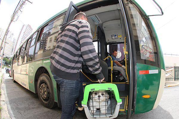 Pets poderão viajar em ônibus intermunicipais sem tarifa extra