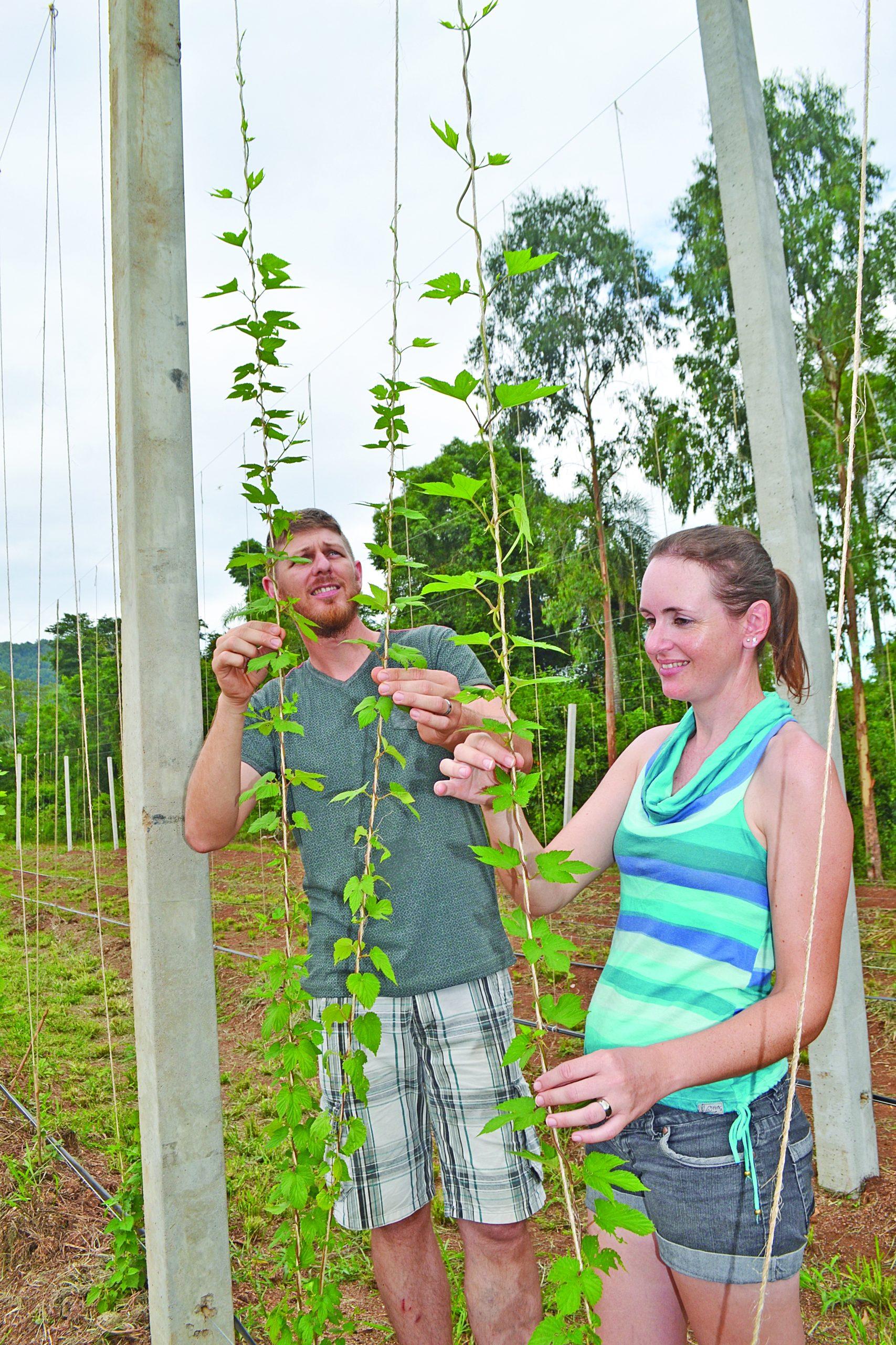 Cervejas artesanais estimulam cultivo - Jornal A Hora