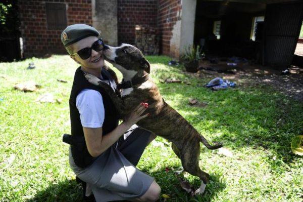 Apama e BM resgatam duas fêmeas de Pit Bull em casa onde três foram mortos em Estrela