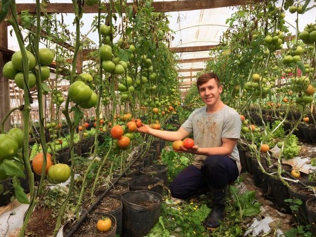 Agricultores aderem ao sistema delivery