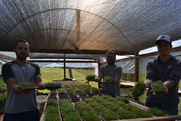 Microverdes: gigantes em benefícios e sabor