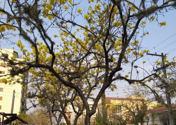 Primavera chega com temperatura amena no amanhecer