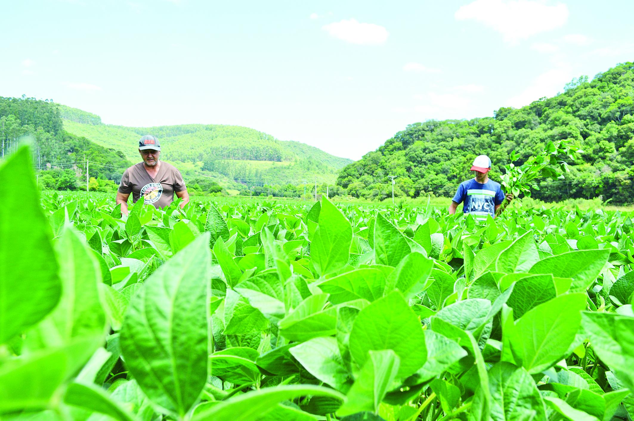 Alta no preço da soja atrai novos produtores