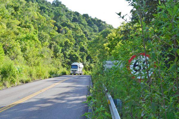 Vegetação invade rodovias e amplia risco a motoristas