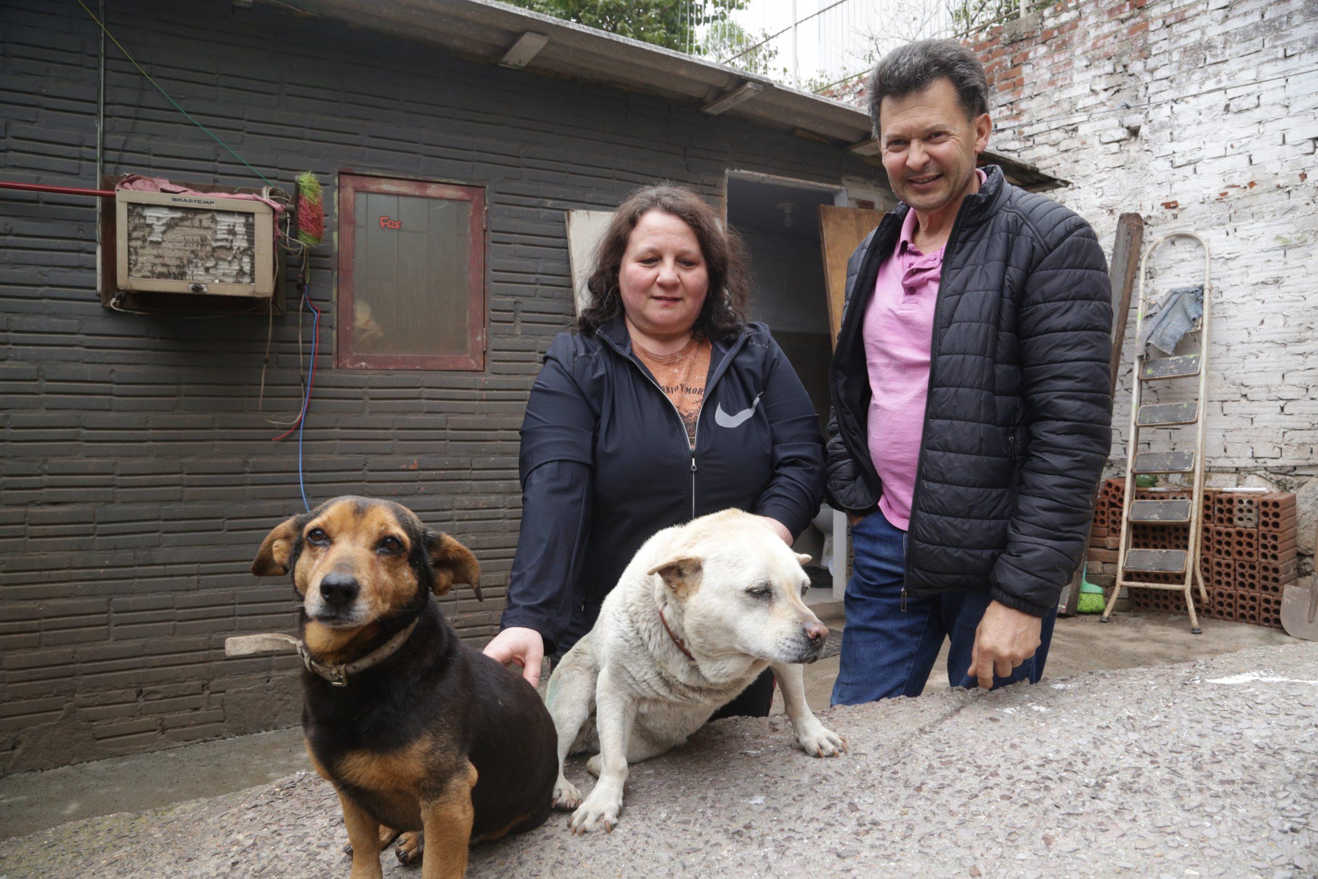 Cães comunitários são alternativa para canis superlotados