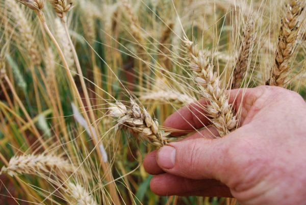 Programa da Dália Alimentos incentiva culturas de inverno